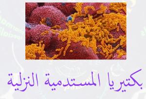 بكتيريا المستــدميـــة النزلية Haemophilus influenza