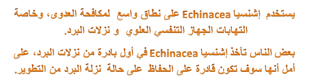 إشنيساechinacea