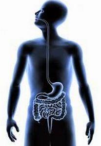لماذا يحدث المغص؟!.. تقلص عضلات الأمعاء الملساء